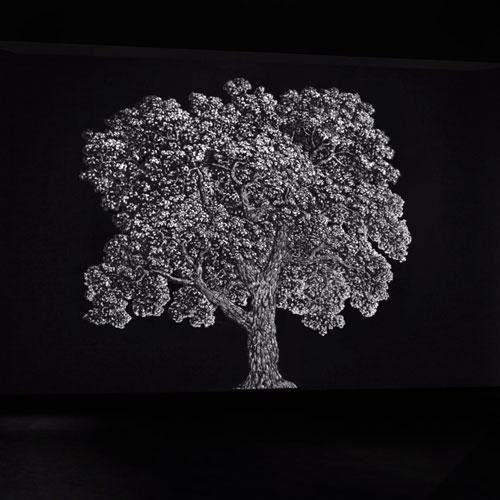 The-Big-Tree
